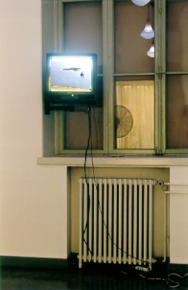 On the back wall, a monitor displaying a remote seascape.