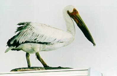 A stuffed pelican.